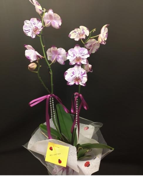Orkide - 19