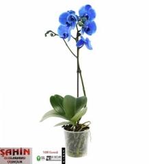 Orkide 10