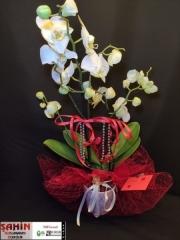 Orkide - 21