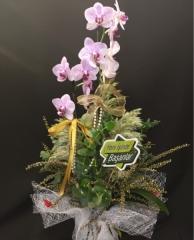 Orkide - 11