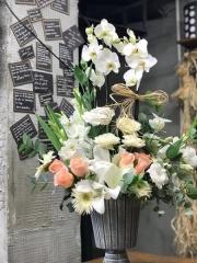 Orkide 21