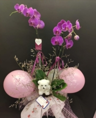 Orkide - 16