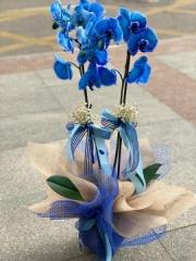Orkide 22