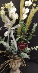 Orkide - 17