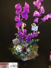 Orkide - 23